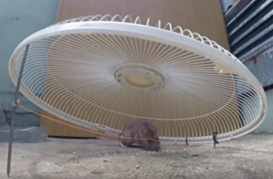 Simpel Cara Membuat Jebakan Tikus Kecil di Rumah
